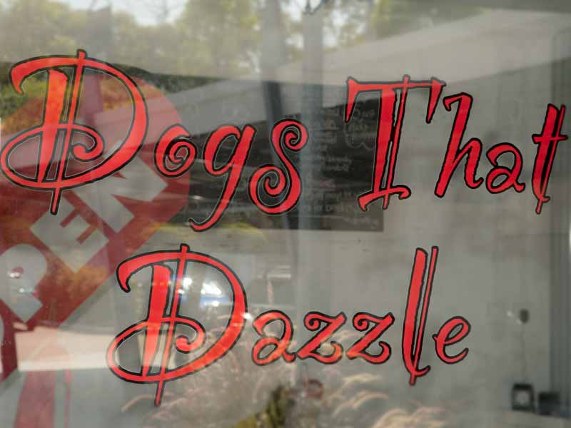Dogs that Dazzle